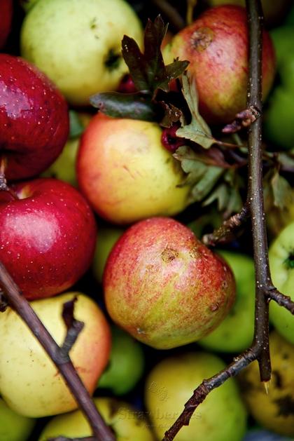 Jabłka w kuchni