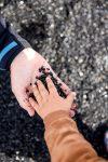 czarna plaża black beach Iceland